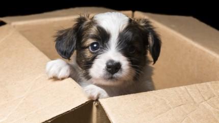Ý là ở nước ngoài thường có mấy người chủ bỏ chó con vào hộp xốp, dán tờ giấy